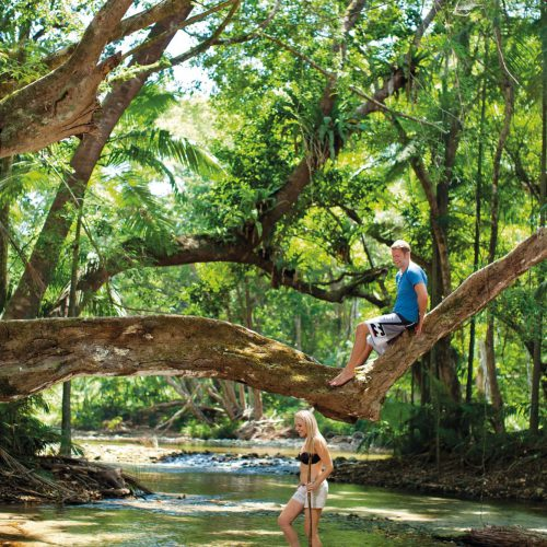 daintree-national-park-queensland-15
