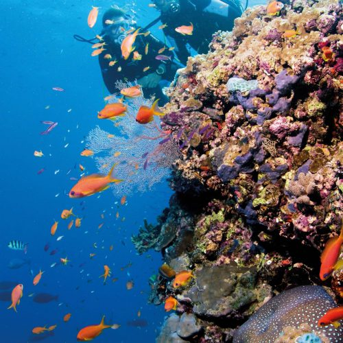 great-barrier-reef-australia-7